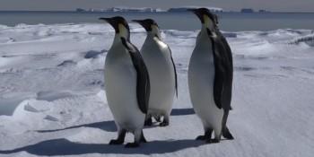 Manchots empereurs 900x546 e1489675046893 350x175 - Expédition Antarctica : préparation de la première plongée
