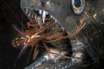 FMISM 2015 : Domenico Roscigno, plongeur de bronze dans la catégorie portfolio