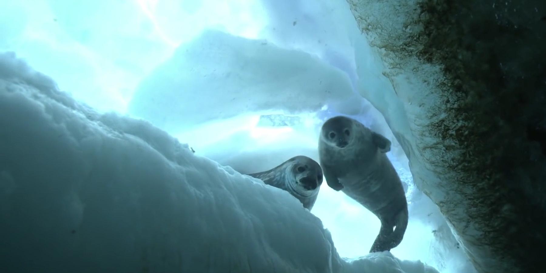 Phoques de Weddell - Expédition Antarctica : doigts de glace et phoques de Weddell