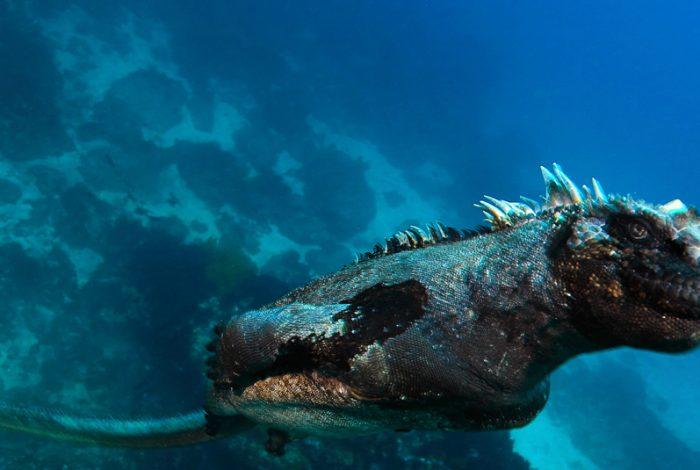 Plongeur ARGENT PORTFOLIO FMISM 2015 EDUARDO ACEVEDO 1070x535 700x470 - FMISM 2015 : Eduardo Acevedo, plongeur d'argent dans la catégorie portfolio