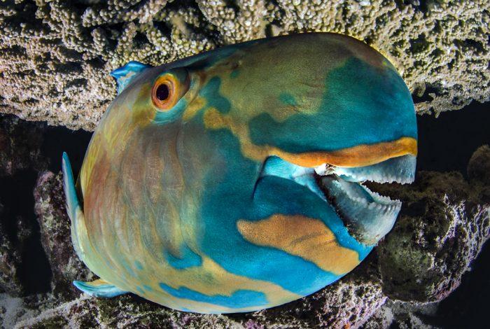 Plongeur BRONZE PORTFOLIO FMISM 2015 DOMENICO ROSCIGNO 07 700x470 - FMISM 2015 : Domenico Roscigno, plongeur de bronze dans la catégorie portfolio