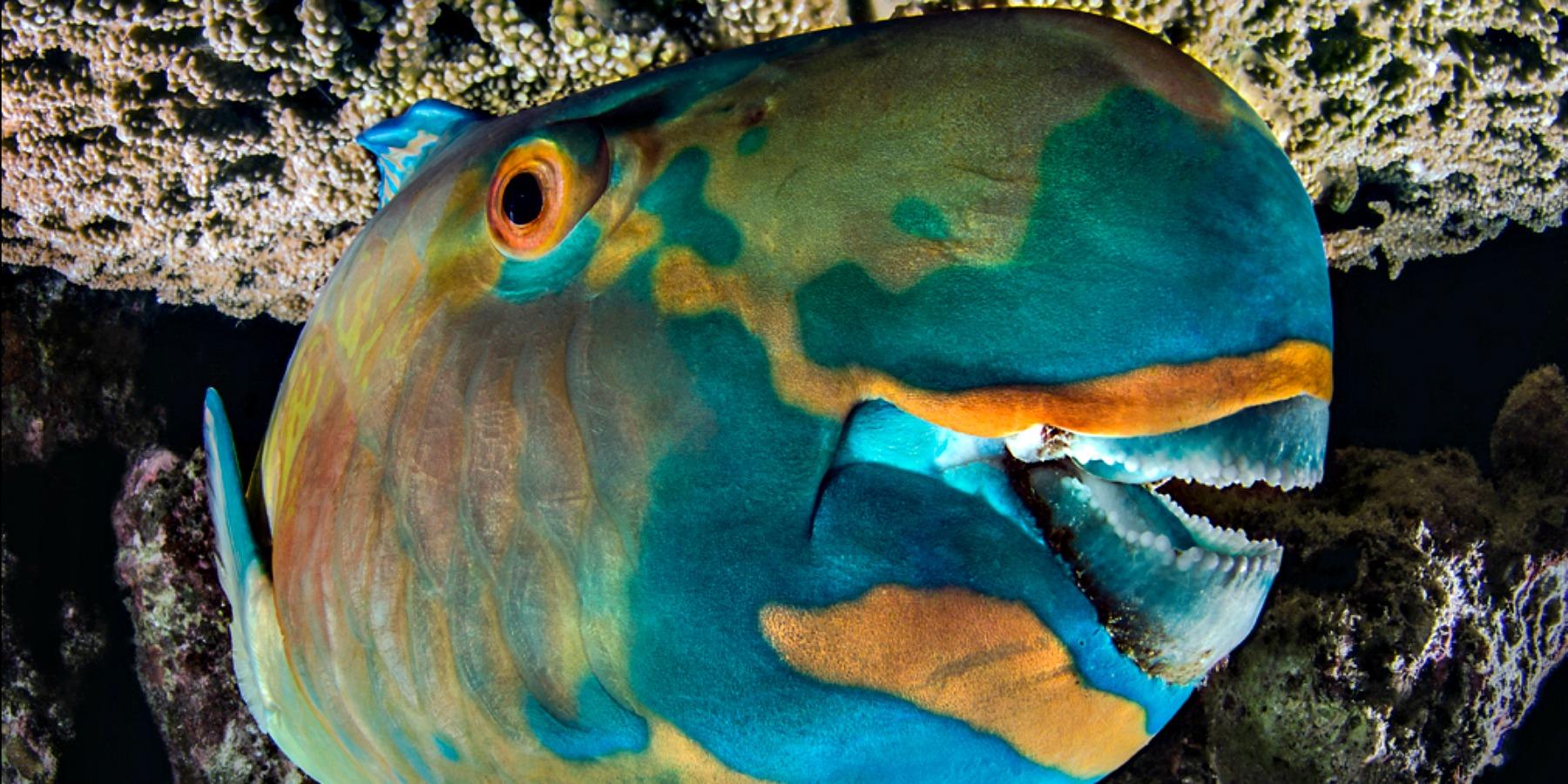 Plongeur BRONZE PORTFOLIO FMISM 2015 DOMENICO ROSCIGNO 07 1900x900 - FMISM 2015 : Domenico Roscigno, plongeur de bronze dans la catégorie portfolio