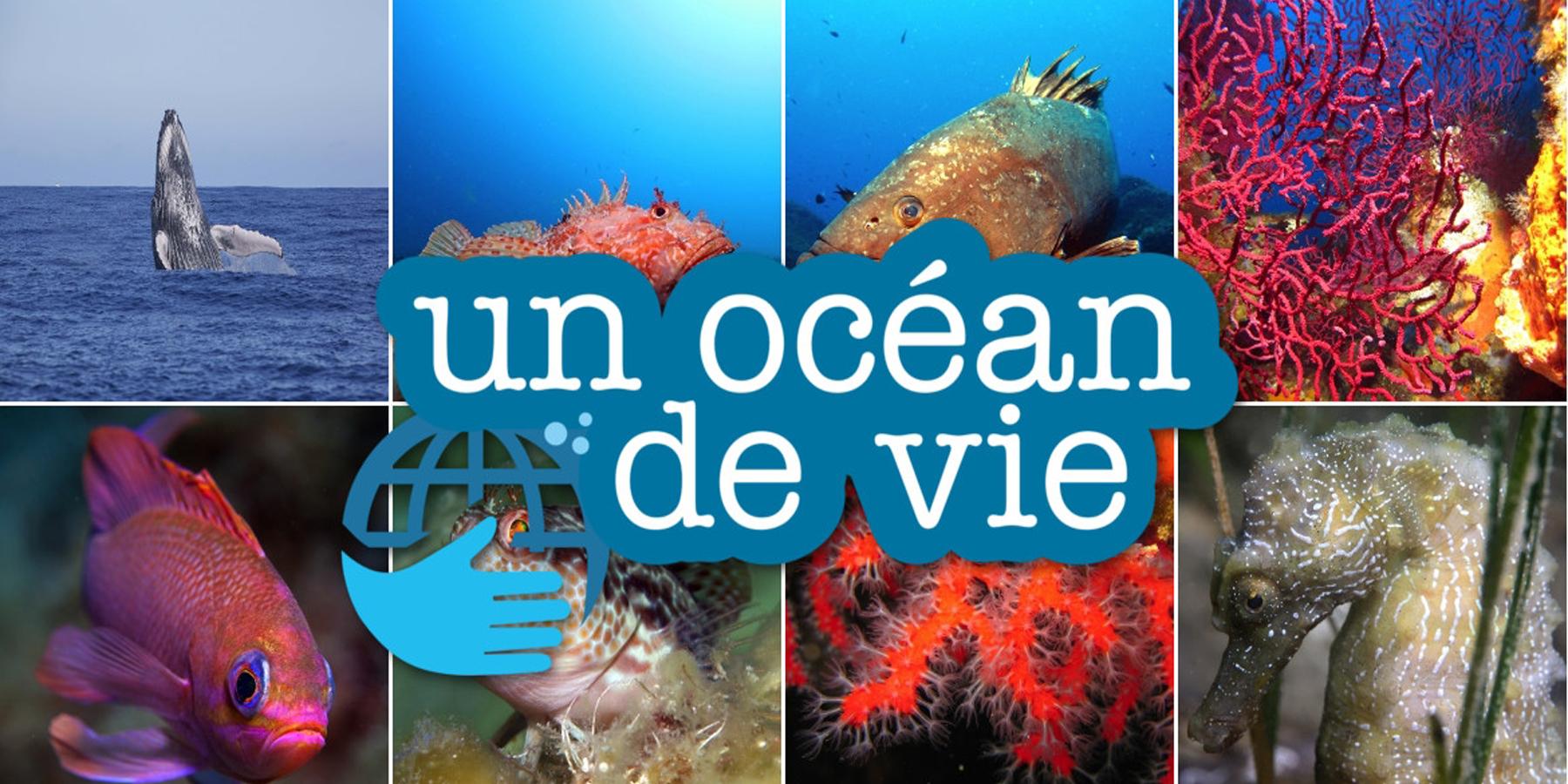 gabarit un ocean de vie - 'Un Océan de Vie' : une association multifacette