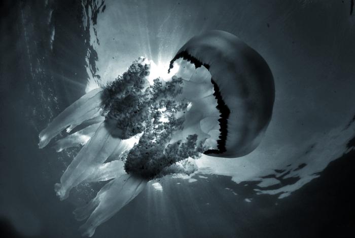 26 Annibale Simi 700x470 - FEISME 2016 : le palmarès... et de superbes images !