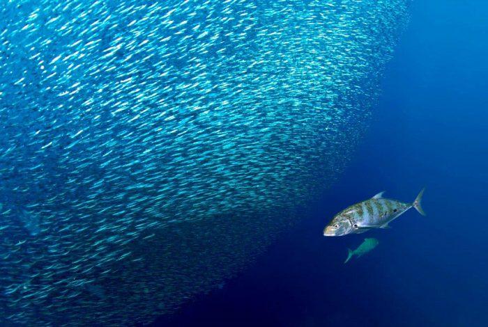 Coup de coeur du Jury   Van Den Borre Els   Belgique Banc de sardines avec 900x580 700x470 - Plein succès pour la 14ème édition de Festisub !