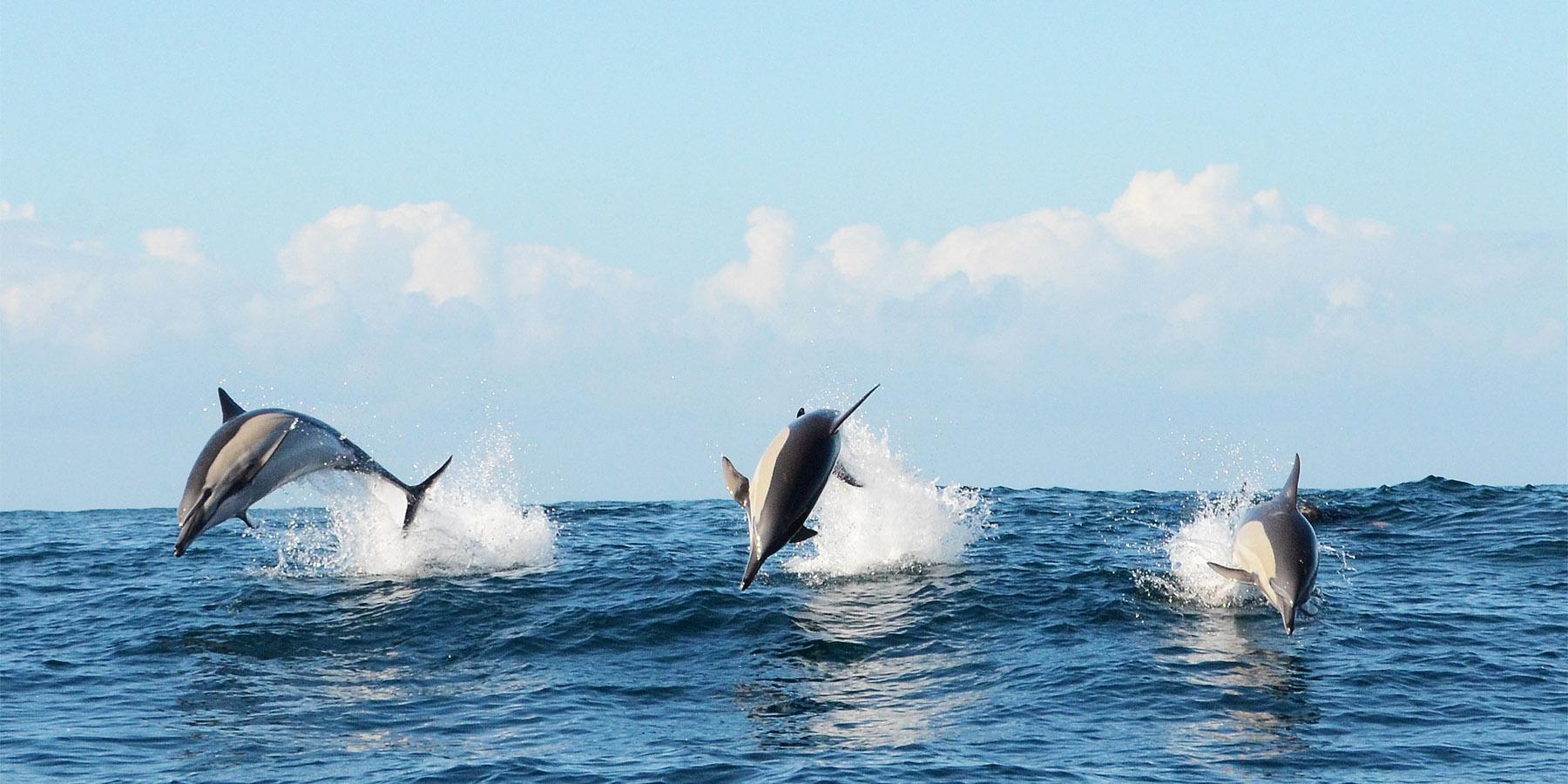 2013 Afrique du sud Nicolas BARRAQUE Dauphins - Journée spéciale océans : plongez dans la grande bleue avec Arte !