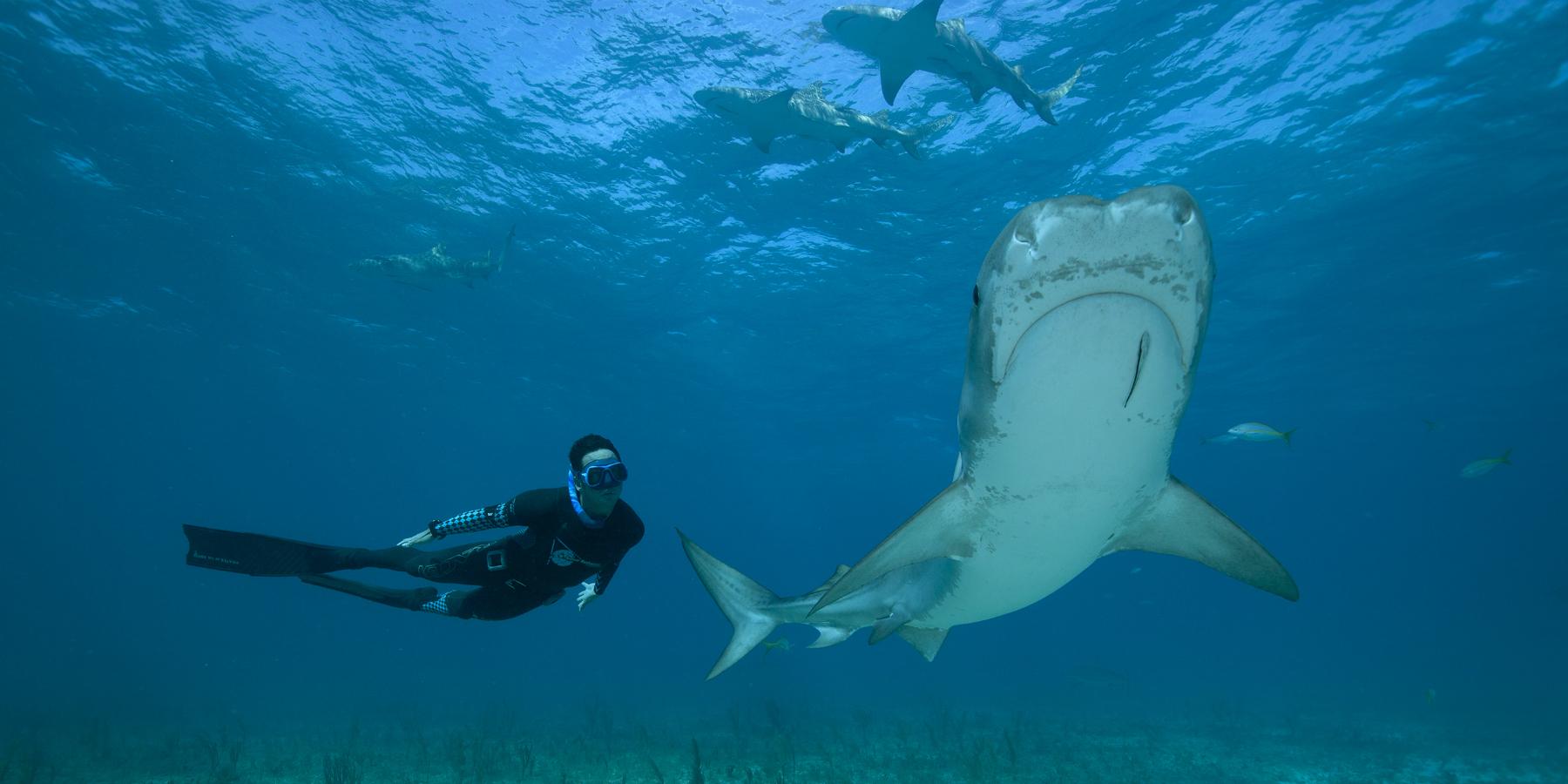 OnALongBreath03 - 'Le temps d'une apnée', plongez au cœur des océans avec Pierre Frolla