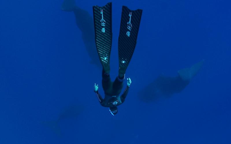 immersion impressionnante aux côtés des cachalots © Philippe Gérad