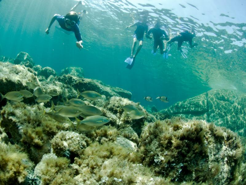 Même à une profondeur peu élevée, les plongeurs peuvent observer de nombreuses espèces de poissons en Corse © Eric Volto