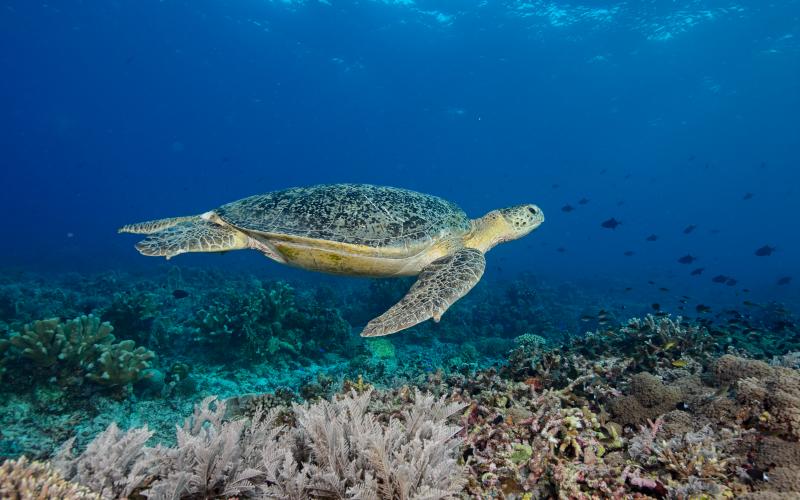 Nagez avec les tortues comme si vous y étiez grâce à l'animation virtuelle du musée ©Maria Teresa Lara/Institut océanographique