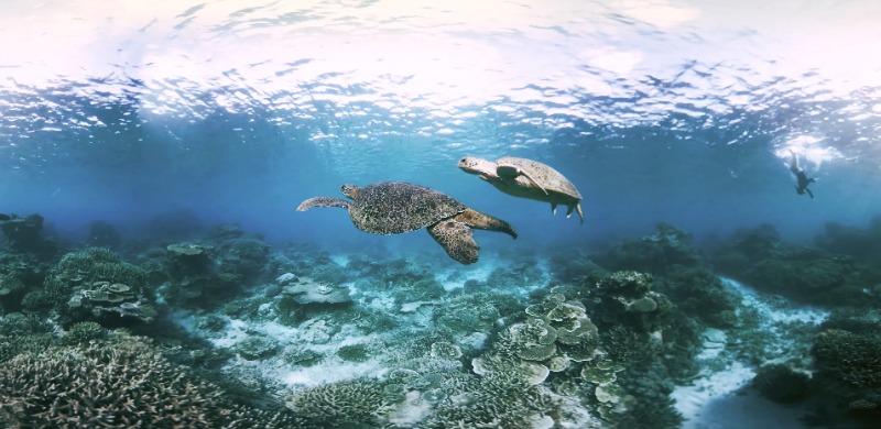 Pendant cette immersion virtuelle vous pourrez notamment croiser des tortues. ©cité de l'océan