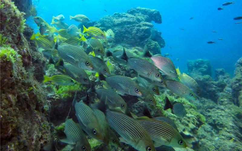 A Baya Drake on croise une quantité impressionnante de poissons © Charlie Hervier
