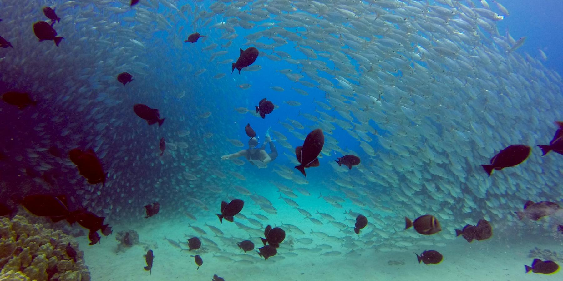 Hawaii © Big Island Visitors Bureau BIVB   Kawika Singson - Obama annonce la création de la plus grande réserve naturelle marine au monde