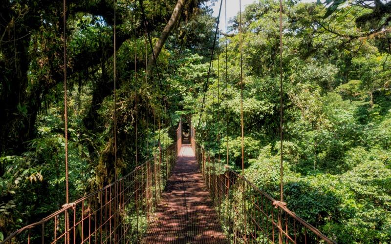 Le Costa Rica c'est aussi l'occasion de découvrir des lieux exceptionnels sur terre, ici un pont suspendu en plein coeur de la forêt tropicale © Charlie Hervier