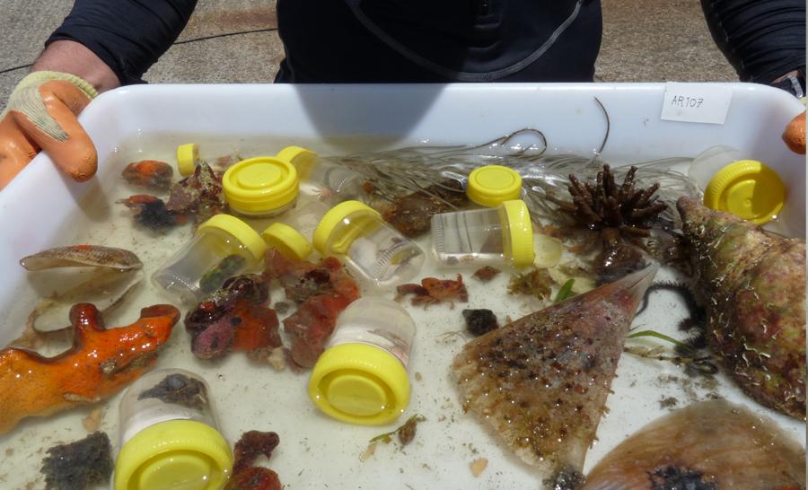 Exemple d'échantillons remontés apèrs les plongées © Clarisse Rondier / MNHN / Madibenthos