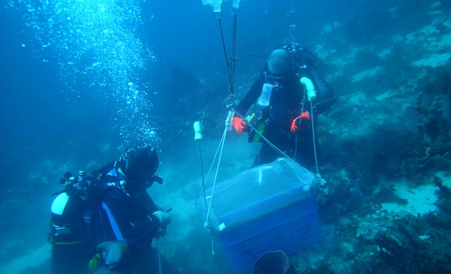 Après les nécessaires prélèvements, les plongeurs remontent les échantillons © Noémie Michez / MNHN / Madibenthos