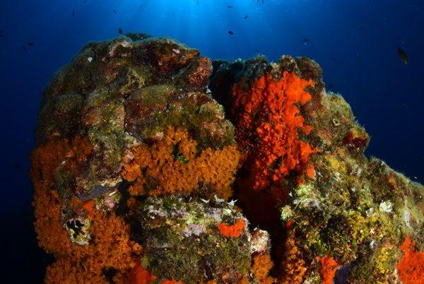 REGNIER 3 600x402 - 36è championnat de France de photo sous-marine : les résultats