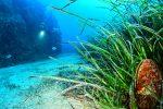 36è championnat de France de photo sous-marine : les résultats