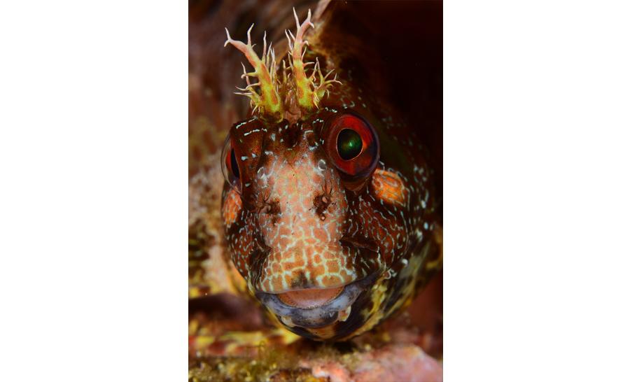 1er : Stéphane SANDON - Christine CAZAL- prix poisson © Stéphane Sandon/36e championnat de France de photo sous-marine