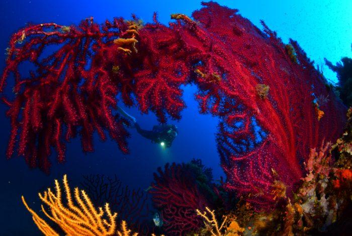 Sandon2 700x470 - 36è championnat de France de photo sous-marine : les résultats