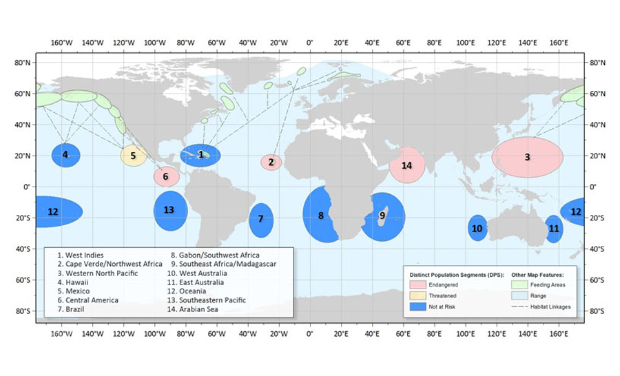 Distribution mondiale des différentes populations de baleines à bosse © NOAA