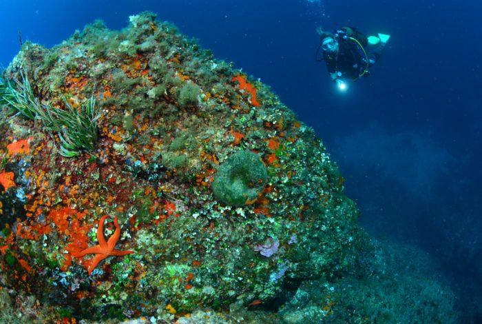 cathy gianni4 700x470 - 36è championnat de France de photo sous-marine : les résultats