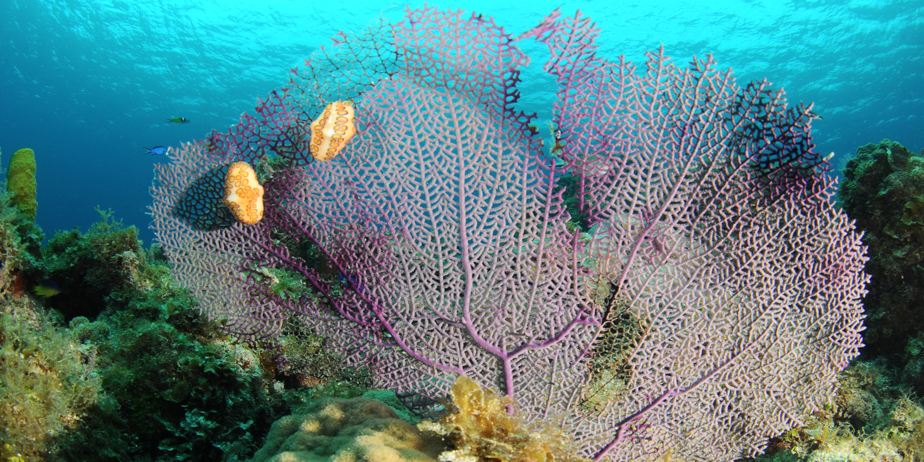 fonds caraibes - Madibenthos, une grande expédition sous-marine en Martinique