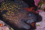 2 MALEGUE Martine 07 5 150x100 - Photos sous-marines : les résultats du 2è challenge YCPR à Marseille