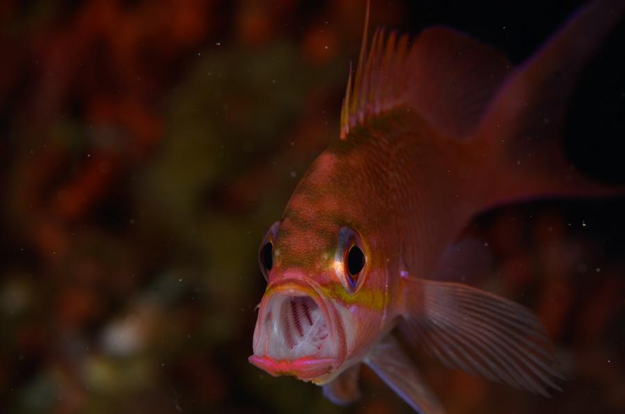Prix thème émotion animale : Fabien Caramazza © Fabien Caramazza/2e challenge photo sous-marine YCPR