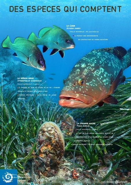 """Affiche """"Des espèces qui comptent"""" © Parc national des calanques"""