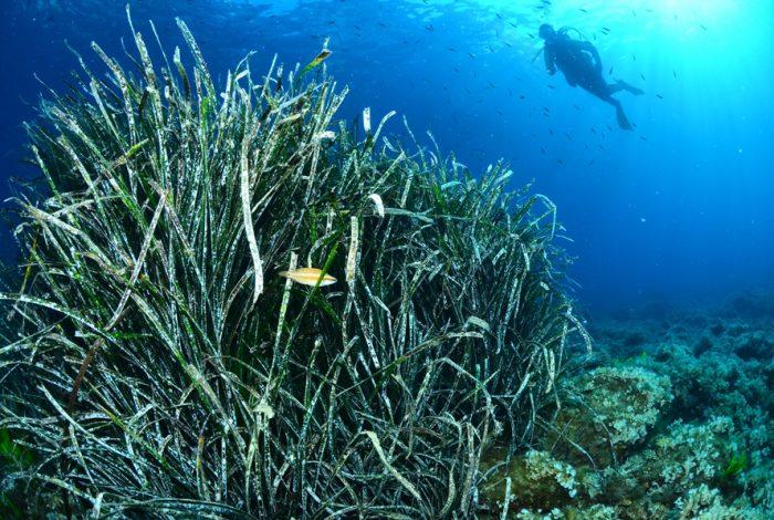 OI 03 1 700x470 - 13è concours de photographie sous-marine de Monaco : les résultats