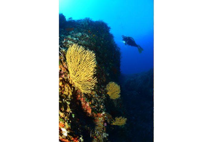 OI 03 2 700x470 - 13è concours de photographie sous-marine de Monaco : les résultats