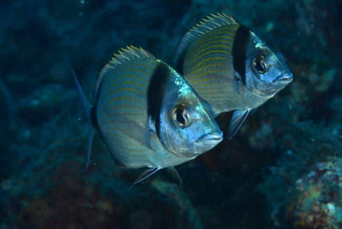 OI 03 3 700x470 - 13è concours de photographie sous-marine de Monaco : les résultats