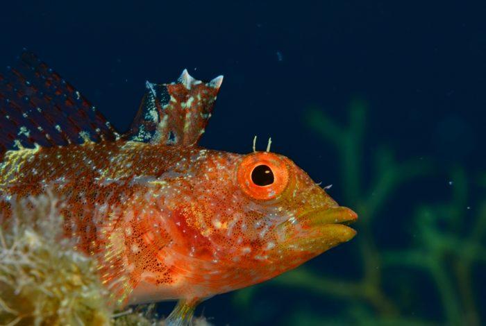 OI 03 4 700x470 - 13è concours de photographie sous-marine de Monaco : les résultats