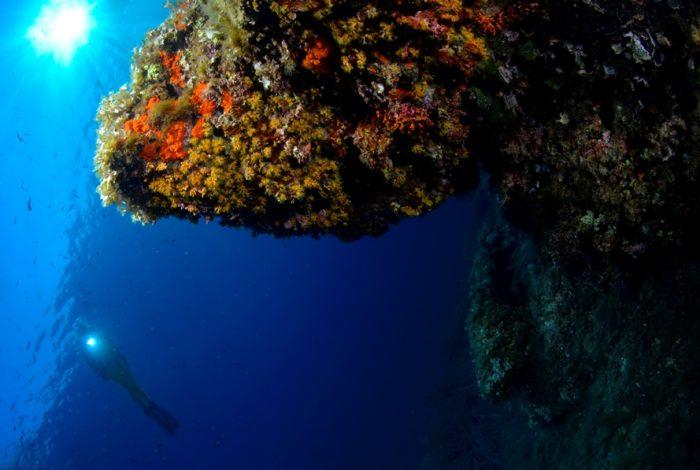 OI 05 1 700x470 - 13è concours de photographie sous-marine de Monaco : les résultats