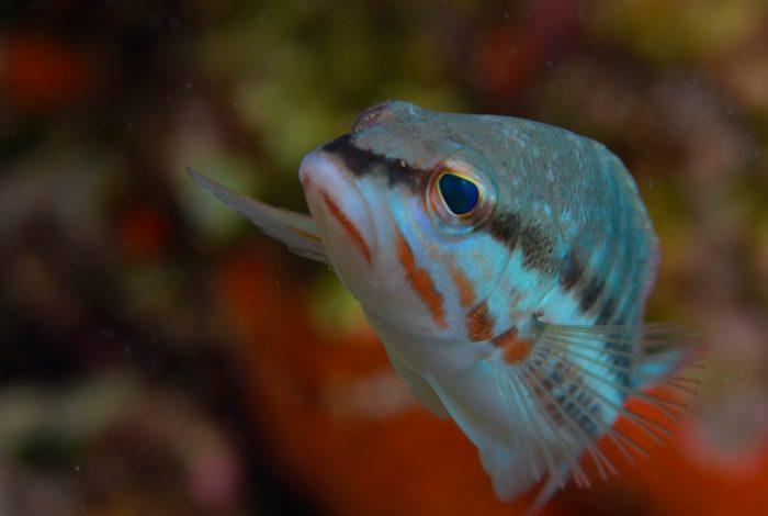 OI 05 3 700x470 - 13è concours de photographie sous-marine de Monaco : les résultats