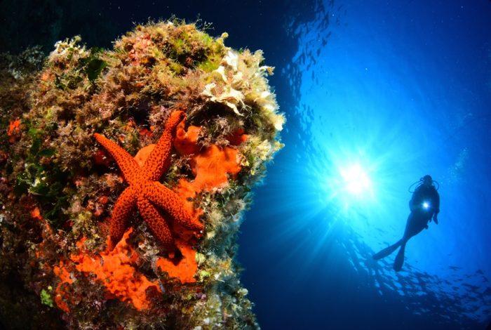 OI 08 2 700x470 - 13è concours de photographie sous-marine de Monaco : les résultats