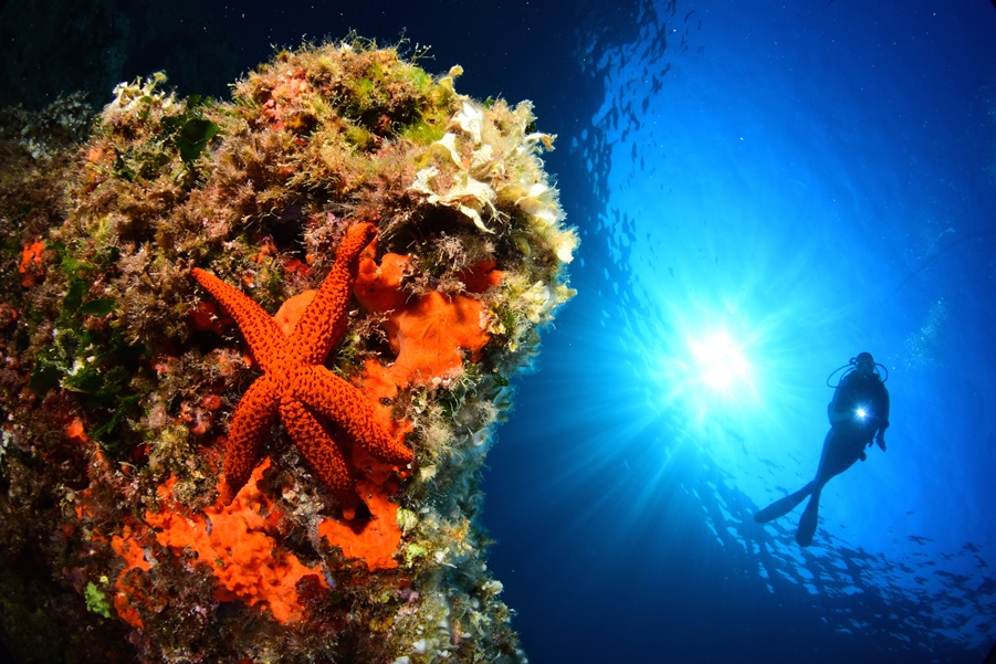 1er prix : Stéphane Régnier & Sophie Perez © Stéphane Régnier/13e concours de photo sous-marine de Monaco