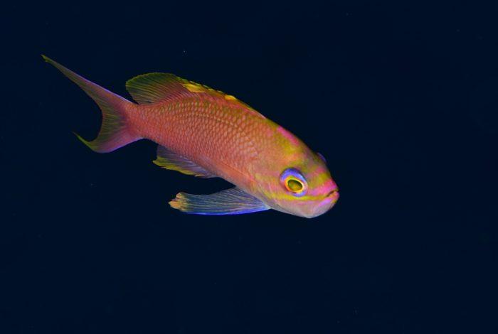 OI 08 3 700x470 - 13è concours de photographie sous-marine de Monaco : les résultats