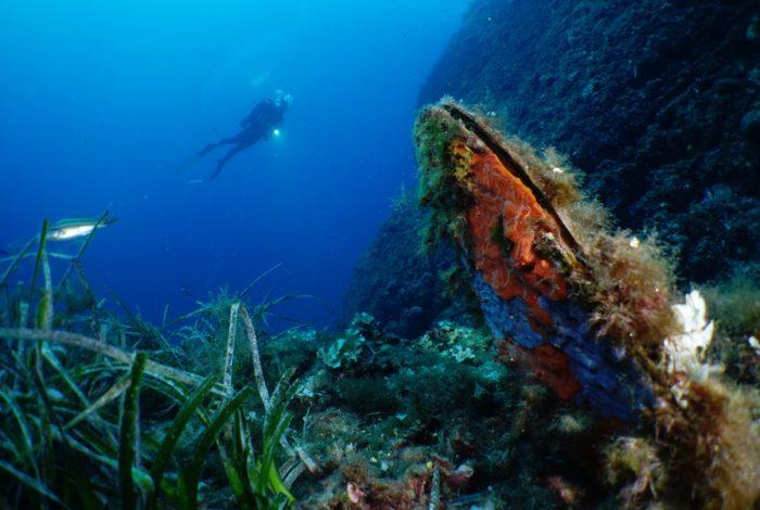 ONI 12 1 700x470 - 13è concours de photographie sous-marine de Monaco : les résultats