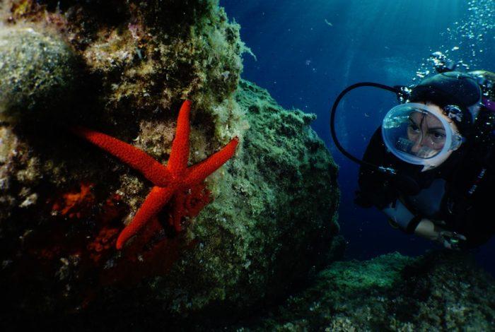 ONI 12 2 700x470 - 13è concours de photographie sous-marine de Monaco : les résultats