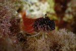 13è concours de photographie sous-marine de Monaco : les résultats