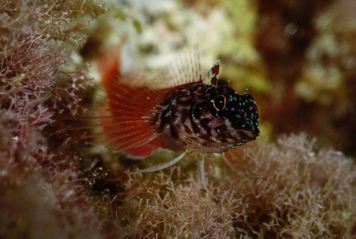 ONI 12 3 700x470 - 13è concours de photographie sous-marine de Monaco : les résultats