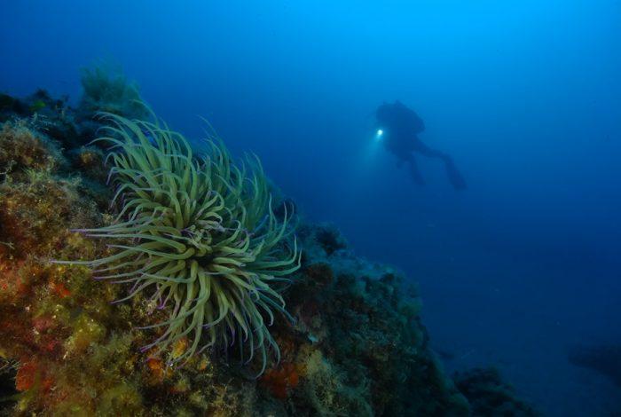 ONI 14 1 700x470 - 13è concours de photographie sous-marine de Monaco : les résultats