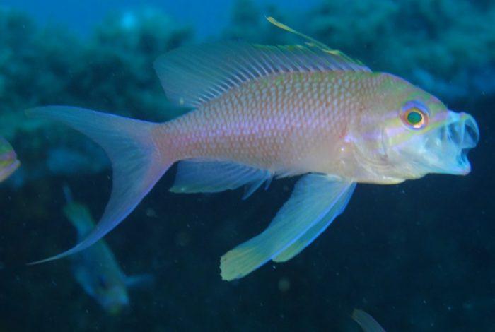ONI 14 3 700x470 - 13è concours de photographie sous-marine de Monaco : les résultats