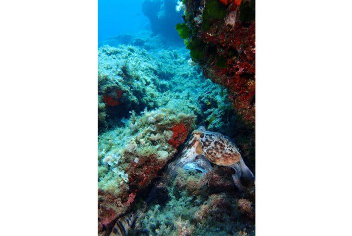 ONI 16 1 700x470 - 13è concours de photographie sous-marine de Monaco : les résultats