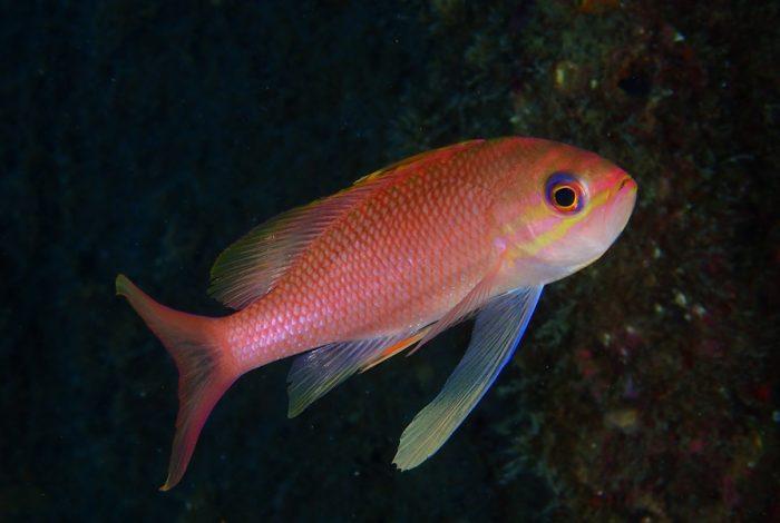 ONI 16 3 700x470 - 13è concours de photographie sous-marine de Monaco : les résultats