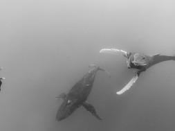 Umberto Pelizzari et les baleines à bosse © Kumbaka Apnea & Yoga school