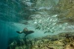 7 Gilles CARMINE Scéne de chasse Mexique 150x100 - 13è festival 'images de l'eau delà'