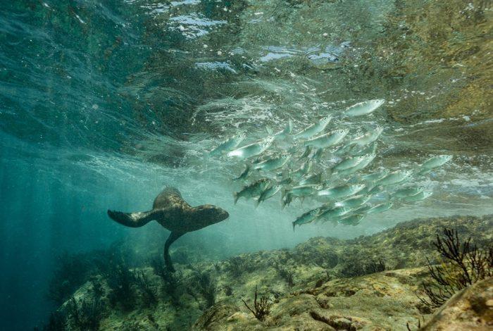 7 Gilles CARMINE Scéne de chasse Mexique 700x470 - 13è festival 'images de l'eau delà'